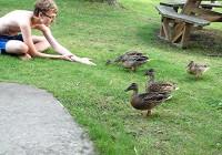 DuckFeedingHarry2015