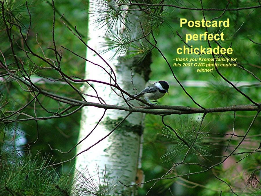 chickadee at resort cabin #19