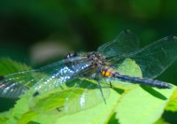 dragonfly behind cabin #13