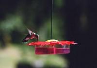 Ellen%20Winner%201%20hummingbird[1]