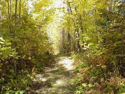 trail[1]