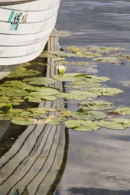 Row boat reflected in lily pad reflected lake